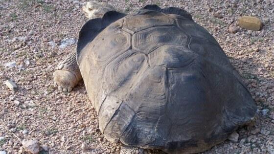 tortoise-682494_1920